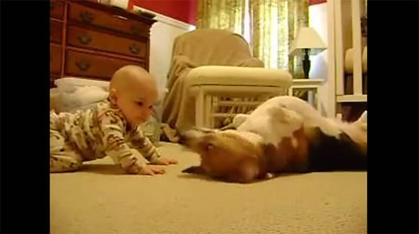 Σκύλος συναντά μωρό για πρώτη φορά (και...λιώνει)