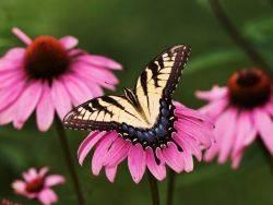 Τραγούδια για μωρά - Μια ωραία πεταλούδα