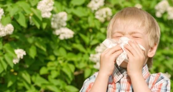 7 βότανα για την ανακούφιση από τα συμπτώματα αλλεργίας στα παιδιά.