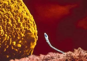εικόνες εξέλιξης της εγκυμοσύνης