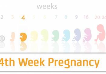 4η & 5η εβδομάδα κύησης (διάσπαση)