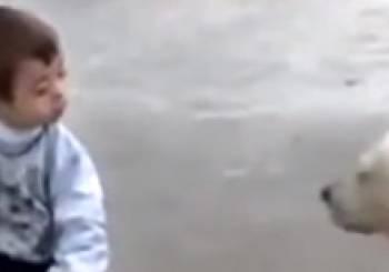 Ένα παιδί με σύνδρομο Down και το λαμπραντόρ του (βίντεο)