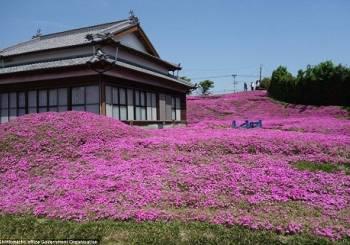 Ο πιο ρομαντικός κήπος με λουλούδια στον κόσμο