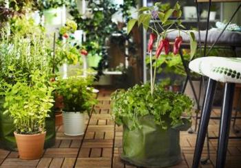 Φροντίζουμε τα φυτά μας μαζί!